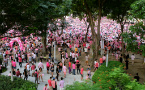 Singapore bans foreign funding of Pink Dot